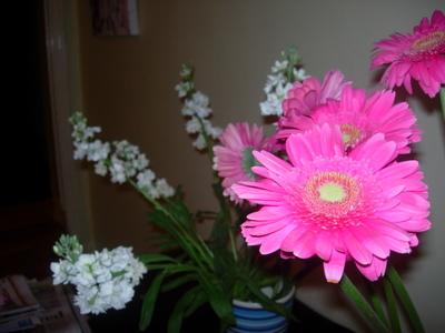 Flowers_121107_001